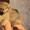 Миниатюрные щенки померанского шпица  #1525340