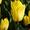 Тюльпан Big Smile (Биг Смайл) от 28 р. со склада в центре Новосибирска! #1525609