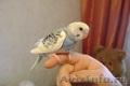 Птенцы получехов