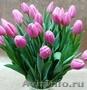 Тюльпаны ежегодная срезка к 8МАРТА 79139044998 новосиб Бугринcкая роща