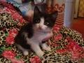 Котят ищут новый дом