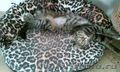 Озорной котенок ищет новый дом