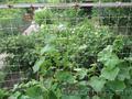 Изделия из стеклопластика для сада,  огорода и сельского хозяйства.