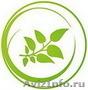 Проектирование. Озеленение. Обслуживание