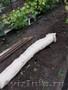 Биомат Сузой газон - Изображение #2, Объявление #1234201