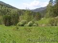 Купить землю на берегу реки Куюм 9,3 Гектара. Чемальский район.  - Изображение #2, Объявление #1501567