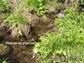 Купить землю на берегу реки Куюм 9,3 Гектара. Чемальский район.  - Изображение #5, Объявление #1501567