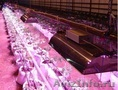 Индукционный светильник для роста растений IGL 300W - Изображение #7, Объявление #1572126