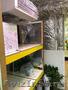 Оптово-розничный цветочный салон  - Изображение #5, Объявление #1605519